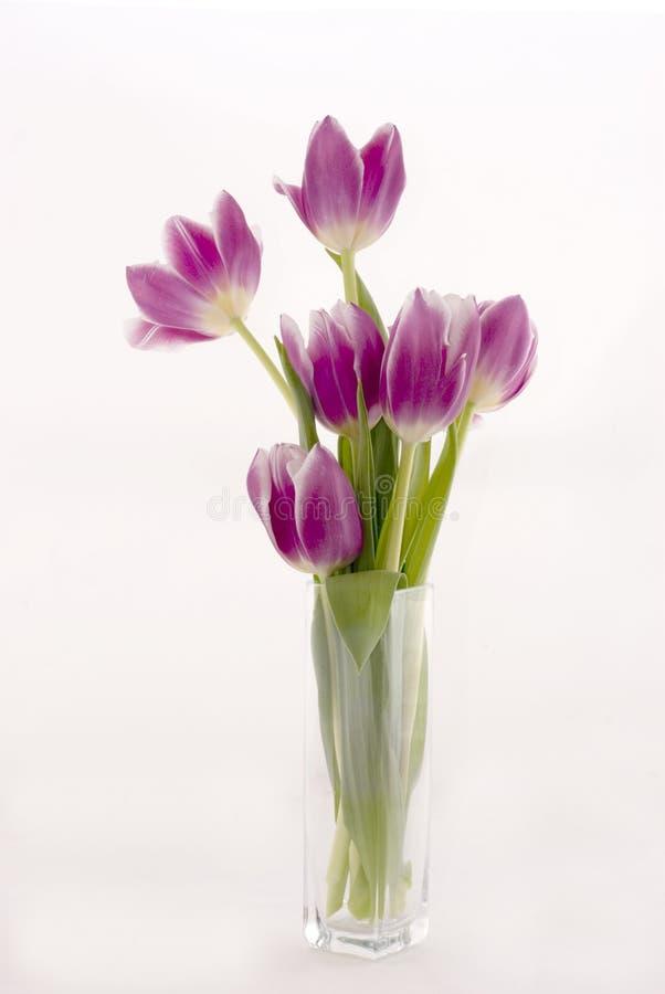 blomstra tulpan arkivbilder