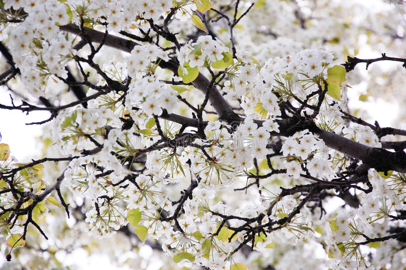 Blomstra våren förgrena sig med blommor royaltyfri fotografi