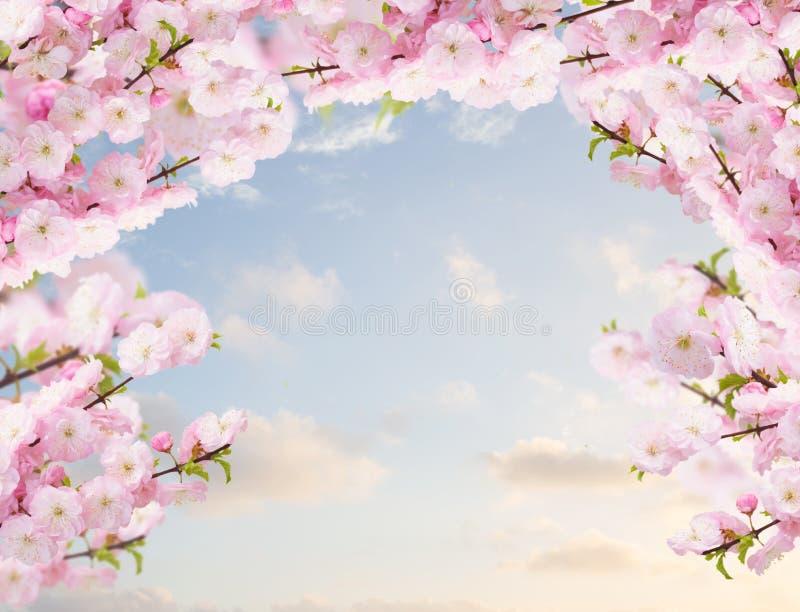 Blomstra vita trädblommor royaltyfri fotografi