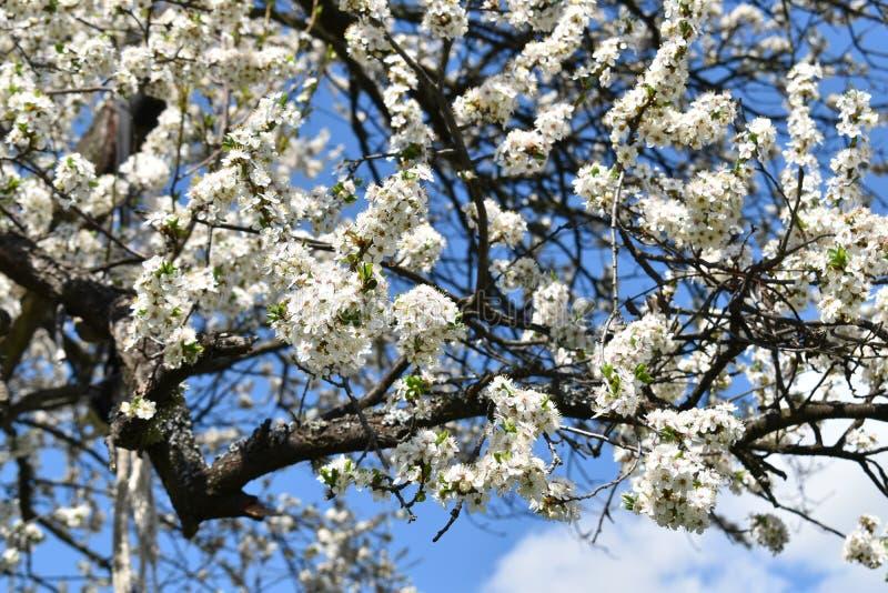 blomstrad tree royaltyfri bild