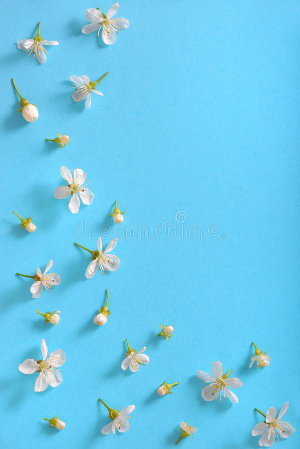 blomstrar Cherrywhite arkivbild
