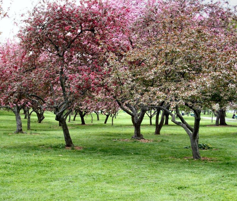 blomtrees arkivfoto