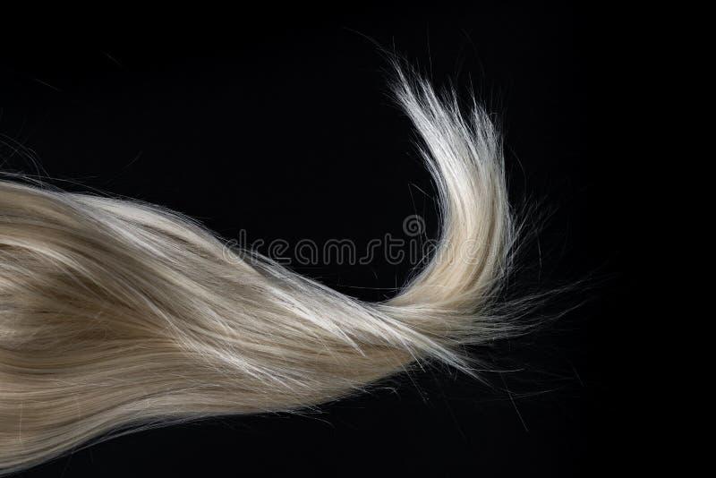 Blond błyszczący włosy na czerni zdjęcia royalty free