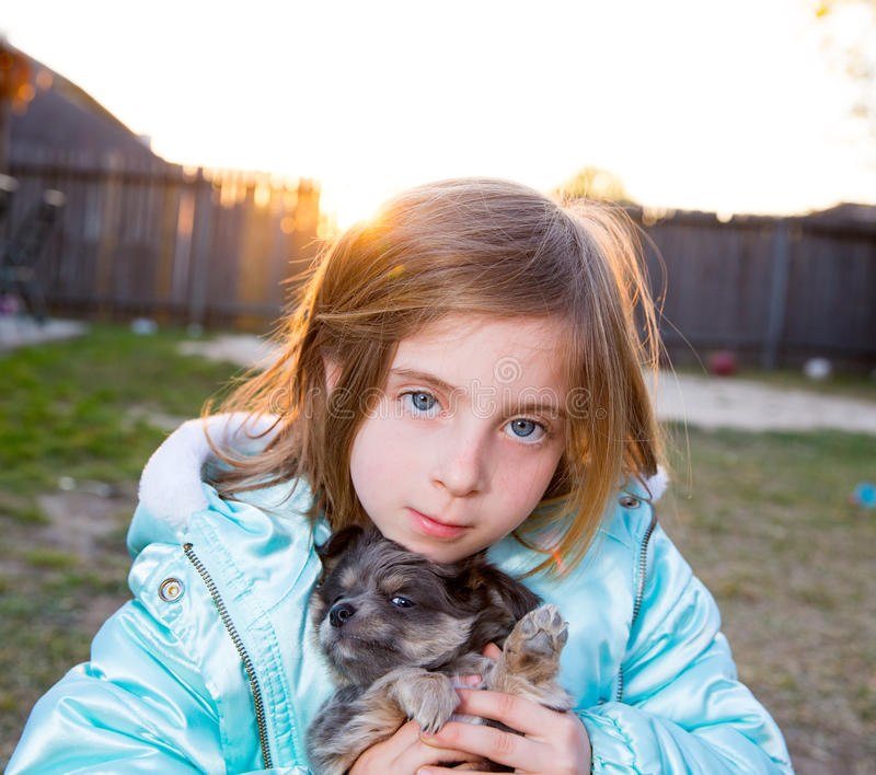 Blond children kid girl playing with puppy dog chihuahua. Blond children kid girl playing with puppy dog hairy chihuahua royalty free stock image