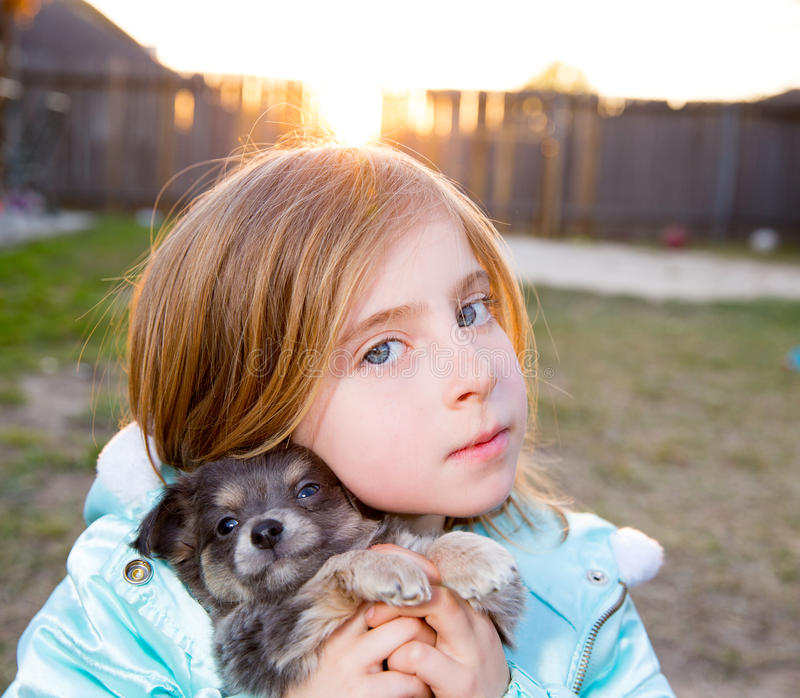 Blond children kid girl playing with puppy dog chihuahua. Blond children kid girl playing with puppy dog hairy chihuahua stock photography