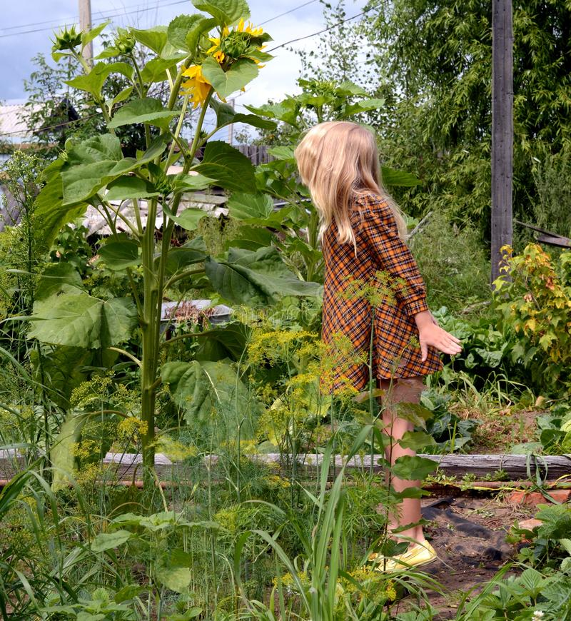 Blond girl in the garden! stock photography