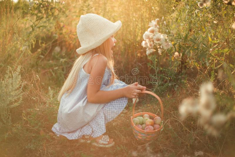 The blond girl with long hair in a hat and dress crouched near large dandelions. A child in the field with a basket in his hands. stock images