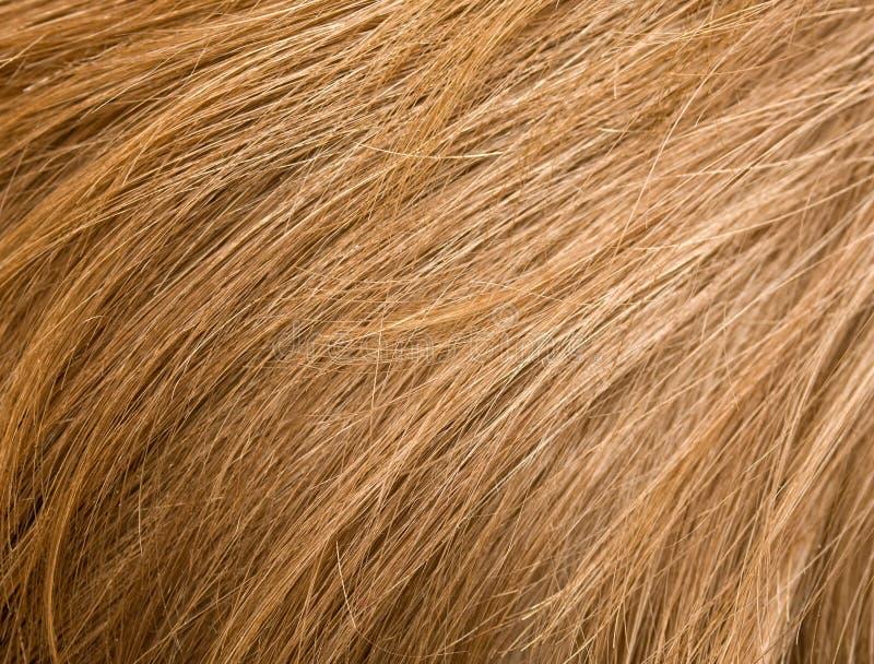 Blond Haar Stock Afbeeldingen