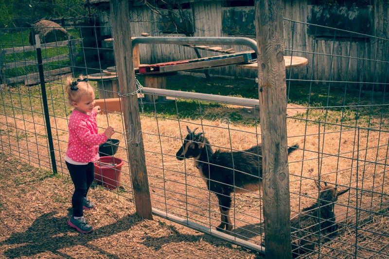 Blond litet barnflicka som ser till och med staketet på geten royaltyfri fotografi