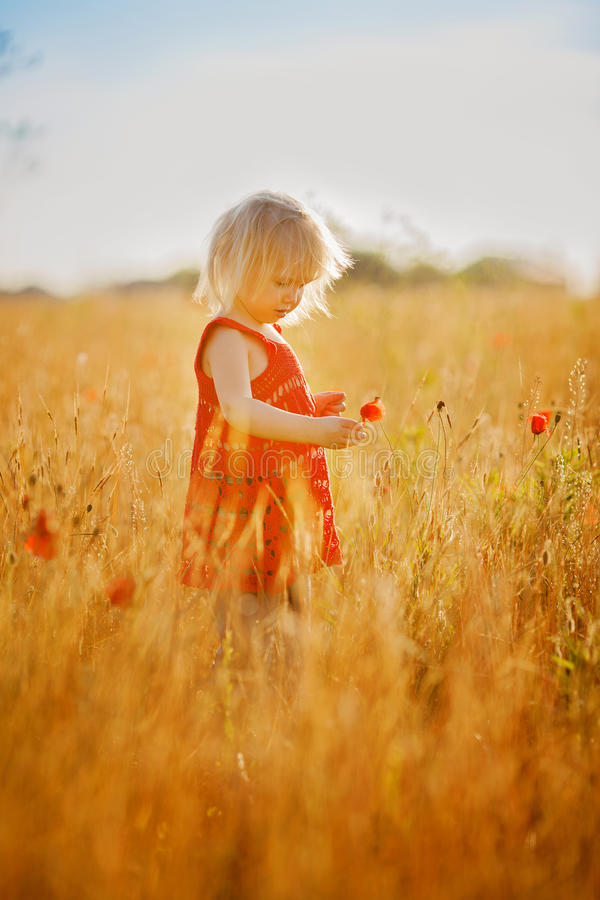 Blond meisje op het gebied met bloemen stock foto's