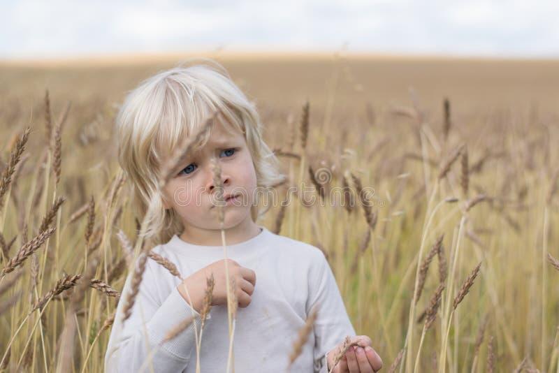 Blond Slawistyczna szczęśliwa dzieciak chłopiec przy dojrzałego żyta pszenicznym polem, zdjęcia royalty free