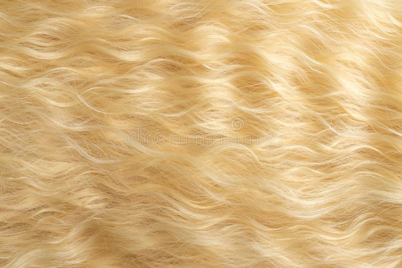 Blond wavy hair pattern. Top view. Blond  beautiful wavy hair pattern. Top view stock images