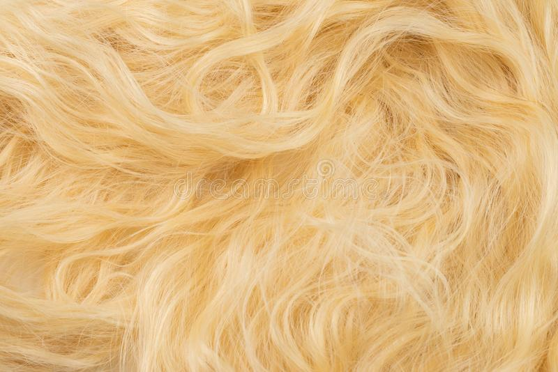 Blond wavy hair pattern. Top view. Blond beautiful wavy hair pattern. Top view stock photography
