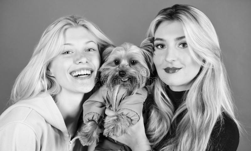 Blonda flickor ?lskar den lilla gulliga hunden Kvinnakramyorkshire terrier Den Yorkshire terriern är den mycket tillgivna älska h arkivbild