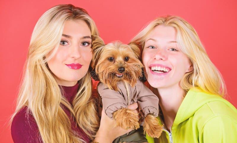 Blonda flickor ?lskar den lilla gulliga hunden Kvinnakramyorkshire terrier Den Yorkshire terriern ?r den mycket tillgivna ?lska h royaltyfria foton