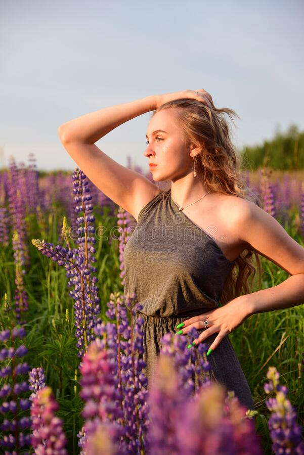 A blonde girl in an elegant grey dress with an open shoulder poses in lupine fields. A blonde girl with long wavy hair in an elegant grey dress with an open royalty free stock photos