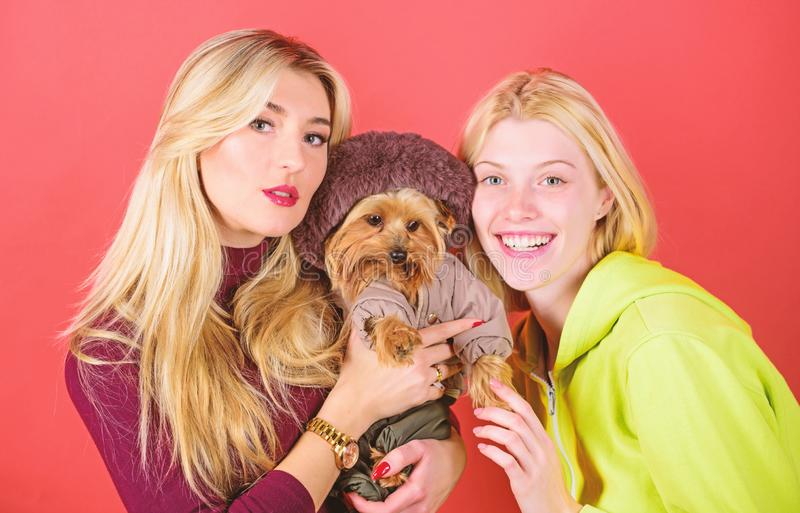 Blonde girls adore little cute dog. Women hug yorkshire terrier. Cute pet dog. Yorkshire terrier is very affectionate. Loving dog that craves attention stock photography