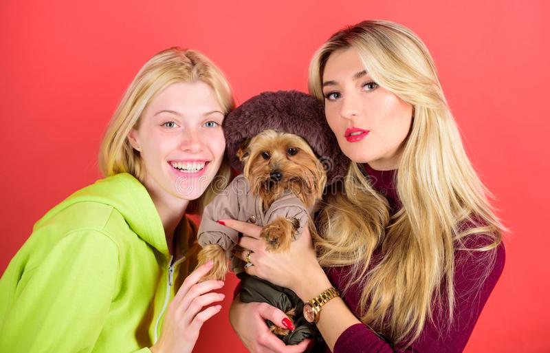 Blonde girls adore little cute dog. Women hug yorkshire terrier. Cute pet dog. Yorkshire terrier is very affectionate. Loving dog that craves attention royalty free stock images