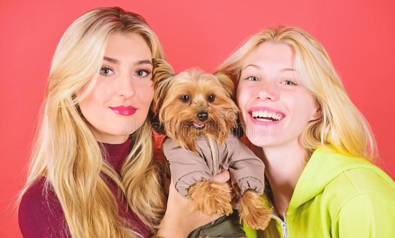 Blonde girls adore little cute dog. Women hug yorkshire terrier. Yorkshire terrier is very affectionate loving dog that. Craves attention. Cute pet dog royalty free stock photos