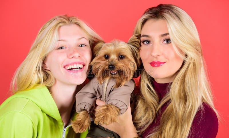 Blonde Girls bewundern kleinen süßen Hund Frauen umarmen Yorkshire Terrier Yorkshire Terrier ist ein sehr liebevoller Hund, der stockbilder