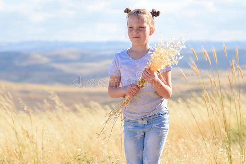 Blonde little girl holding spikes of wheat and ears of oats in golden harvest field. stock photo