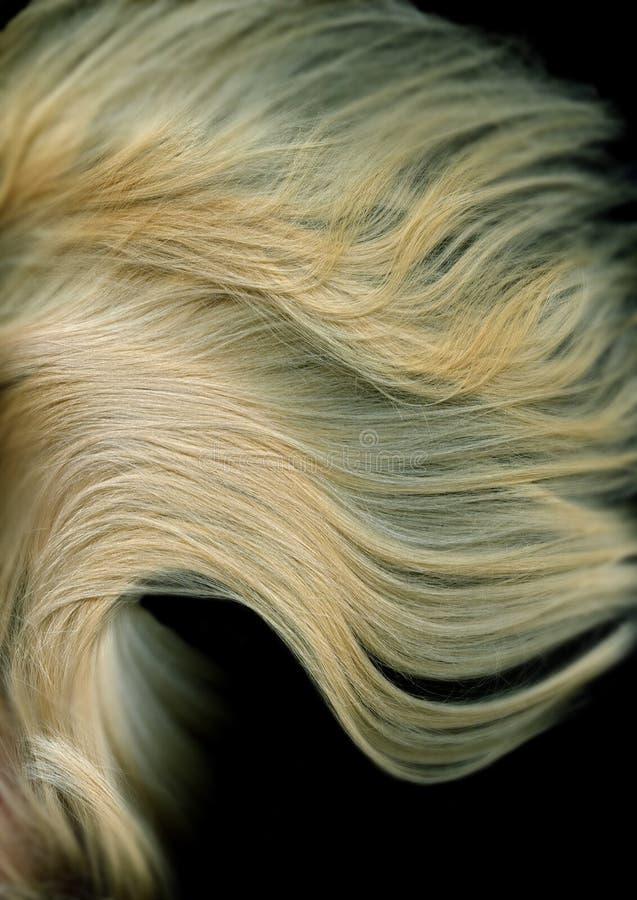 Blonde long Hair royalty free stock photos