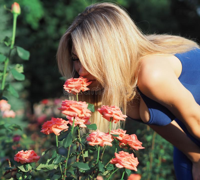 Blonde model at the bright sun posing sniffing the pink roses. Thev Blonde model at the bright sun posing sniffing the pink roses stock images