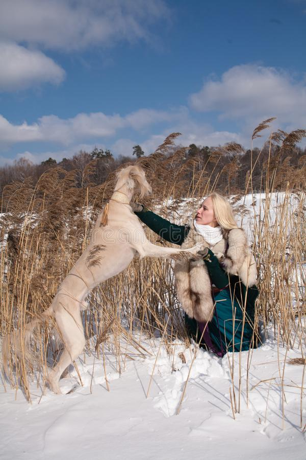 Blonde and saluki. A blonde girl and a saluki in canes in winter royalty free stock photo