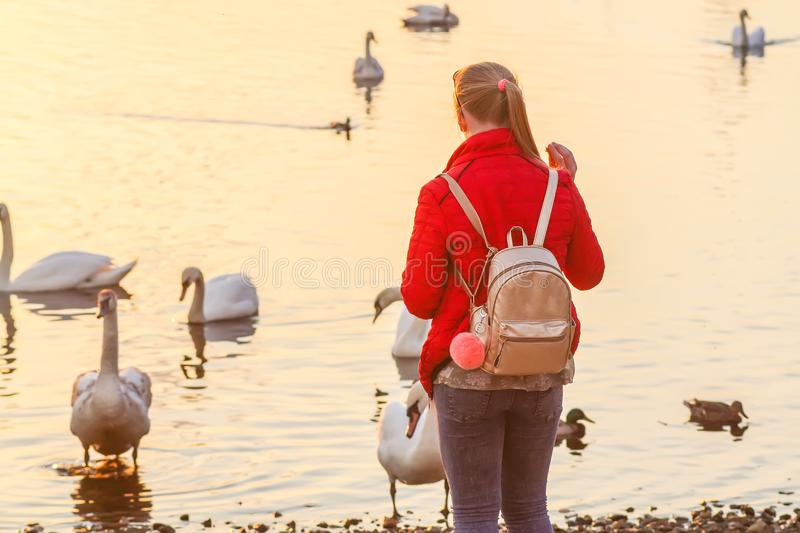 Blonde teenager girl feeding the swans and ducks on river coast at spring. royalty free stock photography