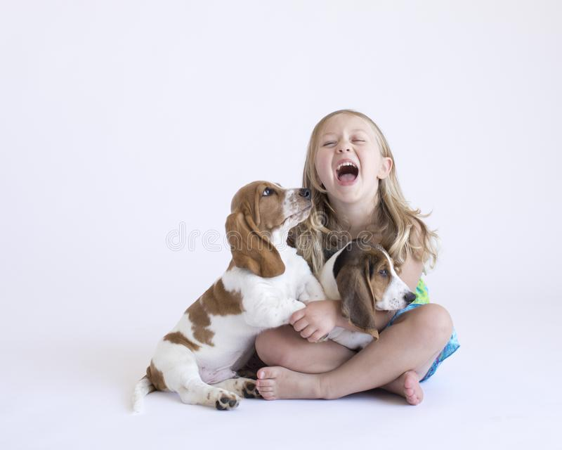 Blonde toddler playing on the white background in the studio with two basset hound puppies. Little girl plays with basset hound puppies in her lap on the floor stock images