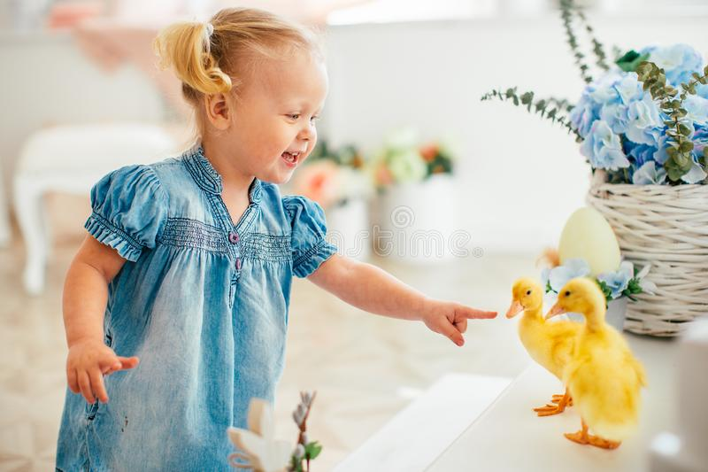 Blondel little girl in blue dress and two ponytales playing with yellow fluffy ducklings and laughing. Easter, spring royalty free stock photos