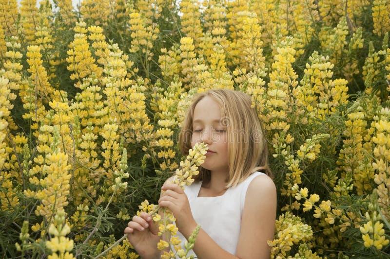 Blondes kleines Mädchen, das gelbe Wildflowers riecht stockfotos