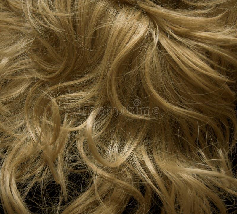 Blondie wig royalty free stock image