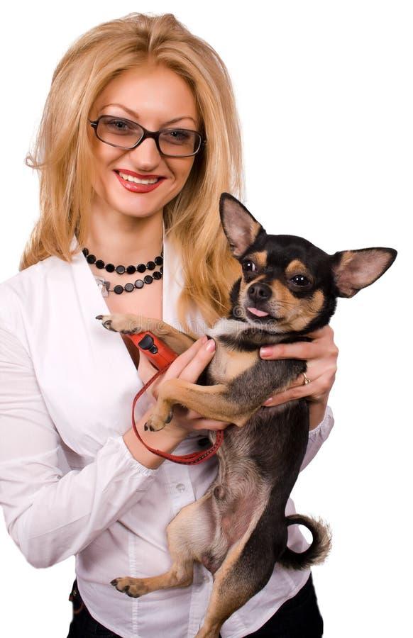 Blondine- und Chihuahuahund trennte stockbilder