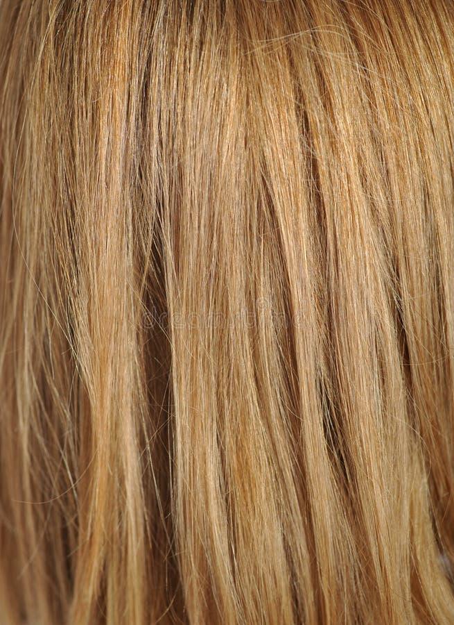 Blondyn, makro- strzał zdjęcie stock