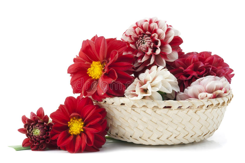 Download Blood Buds Of Dying Dahlias Stock Image - Image: 21678031