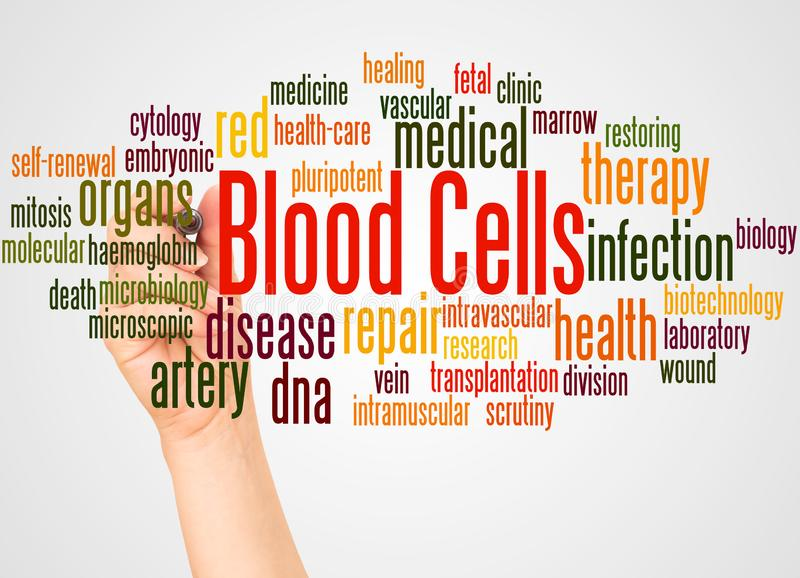 Blood cells word cloud and hand with marker concept royalty free stock image