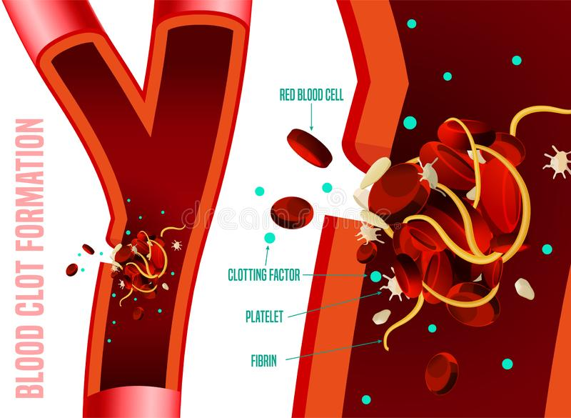 Blood clot formation vector illustration