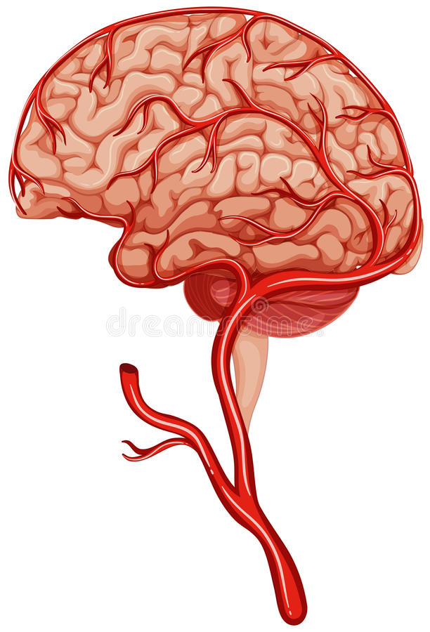 Blood clot in human brain. Illustration vector illustration