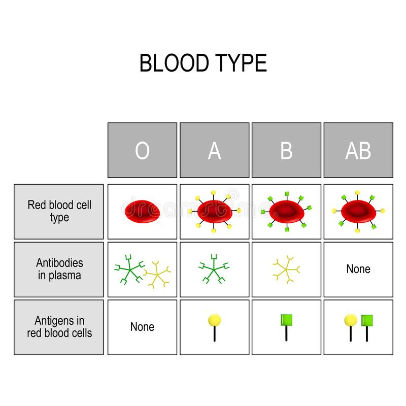 Types of blood A, B, AB, O. Recipient and Donor. Blood groups Chart. There are four basic blood types, made up from combinations of the type A and type B royalty free illustration