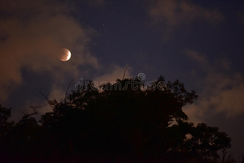 Blood Moon with foreground trees. A beautiful dark high resolution shot of the inky night sky showing the Blood Moon Eclipse of October, 2014, with much dark stock photos