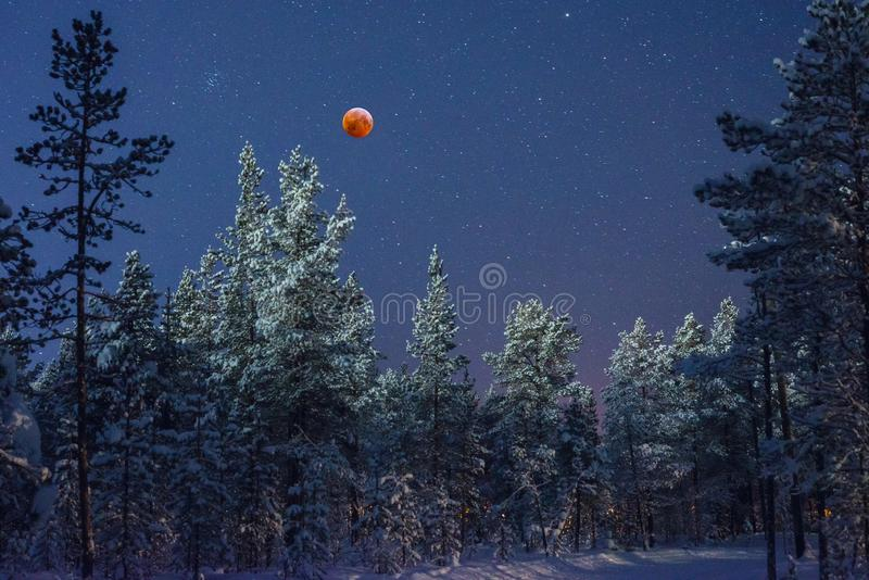 Blood moon in the taiga. Super blood moon. Lunar eclipse over the taiga forest in Lapland, northern Finland. Freezing morning and clear sky was perfect for this royalty free stock photography
