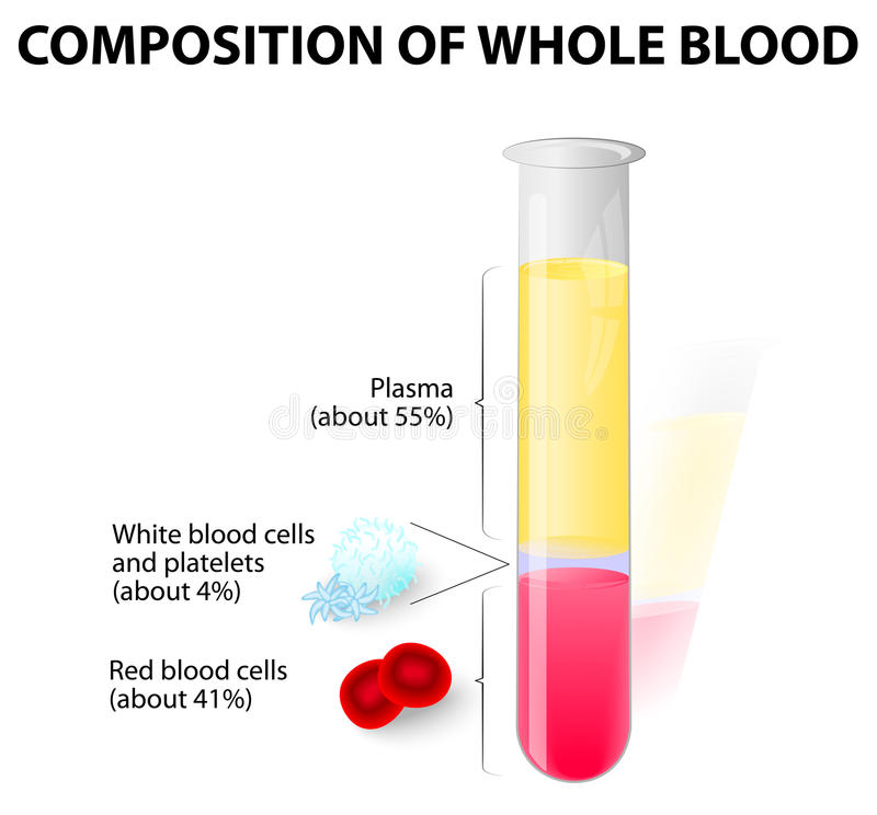 Blood plasma and formed elements in Test tube stock illustration