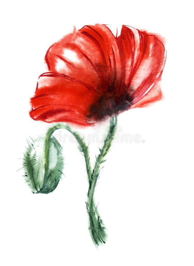 Blood-red poppy flower on black stalk isolated on white background with red and black paint spots. Watercolor hand drawn royalty free stock photos