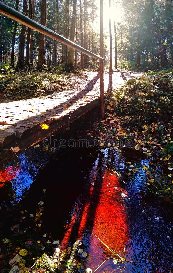 Blood river in the forest stock photos