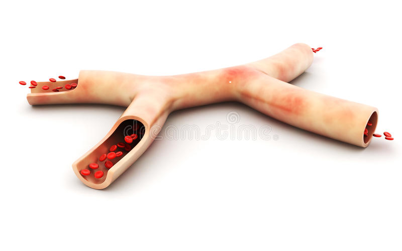 Blood vein and red blood cells stock photos