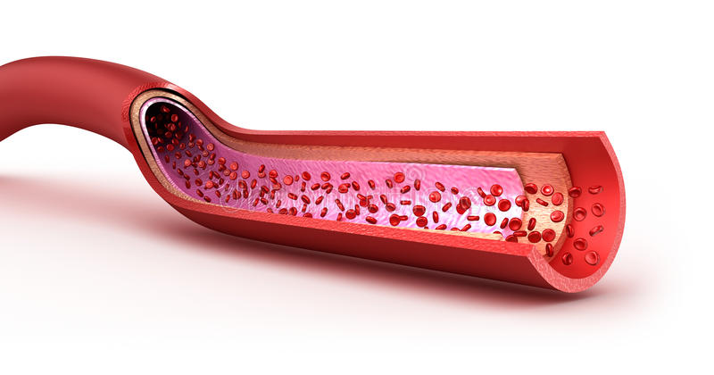 Blood vessel sliced macro with erythrocytes. Isolated on white royalty free illustration