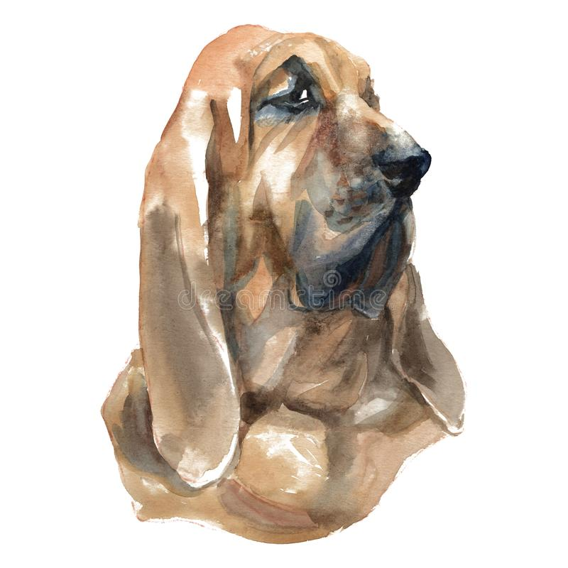 Bloodhound royalty ilustracja