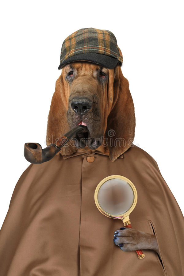 Bloodhound dog with magnifying glass and pipe royalty free stock photo
