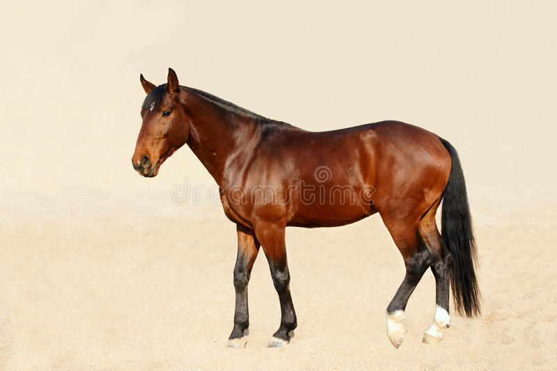 Download Bloodstock Horse Stock Photography - Image: 28705482